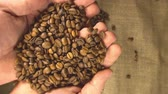 coffee farmers : High quality video of taking coffee beans in real 1080p slow motion 120fps