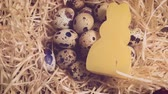 fabuloso : Quail eggs with a candle in the nest, Easter theme, quail nest