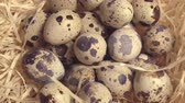 studentka : Quail eggs in the nest with straw, Happy Easter, Easter atmosphere Wideo