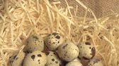 codorna : Nest with five small eggs close up,Easter eggs on silk fabric, Happy Easter, Easter paraphernalia, Easter holiday in my videos Stock Footage
