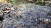 流れる : Fast forest stream closeup.