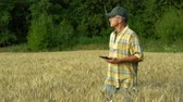 mérnök : The agronomist in the field studies the grain harvest in the field and records the information on a tablet on a Sunny summer day.