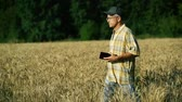 sojabohne : A middle-aged agronomist examines the ears of wheat in the field and writes information on a tablet on a Sunny summer day.