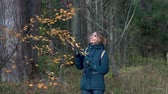 пожилые : A slender sweet woman walks through a beautiful autumn forest among birches and firs and admires the yellow dry leaves on the bushes on an autumn day.
