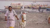 varanasi : VRINDAVAN, India - October 10, 2017: local man in a dress is the chain white cow and drives a stick. Vrindavan. India. For editorial use only. Stock Footage