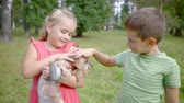 pooch : little pretty girl is holding small funny dog in hands and her friend boy is stroking pet Stock Footage