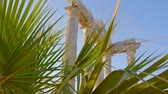 padrão floral : Close-up shot of a green palm leaves shaking on the wind, ancient building on the background.