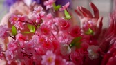 personage : close-up of artificial branches of sakura with bright pink blossoms in hands of young woman Stock Footage