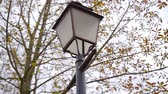 Below shot of a city lantern with tree branches on the background. Stok Video