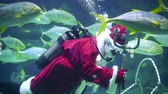 congratulação : Santa underwater in scuba diving swims in a flock of fish