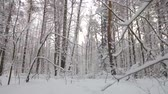 betulla : flying camera in a fabulous winter forest. pine, birch and aspen trees in the snow on the branches Filmati Stock