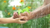 terra : Baby and senior man`s hands holding young plant in the rain. Ecology concept Vídeos