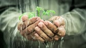 terra : Old man`s hands holding young plant in the rain. Ecology concept