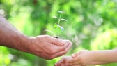 terra : Senior man and baby holding young plant in hands. Ecology concept. Slow motion