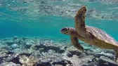 animais : hawksbill sea turtle