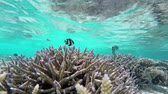barreira : coral garden at reef atoll