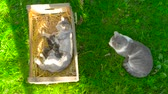 católico : Cat family has rest on the grass