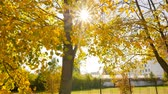 living environment : Beautiful autumn landscape. Sun lights. Camera in motion