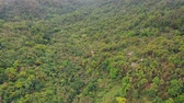 helicopter view : Birds-eye view of the forest