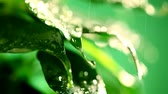 Macro waterdrop on green leaves