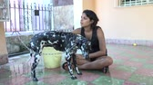 родословная : Cuban teenager girl bathing her Dalmatian dog in a house porch, young teen taking care of her beautiful purebreed pet.