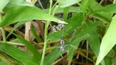 assassinato : Large black ant attack for usurp territory in tropical rain forest, Thailand.