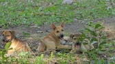 duyarlı : Puppies dog sitting in garden. Stok Video