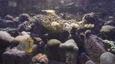 sasanka : 4k video of fish tank with coral and fish