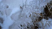 tüske : Plants frozen in the ice on the shore of the bay Stock mozgókép