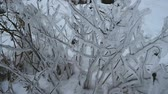 Plants frozen in the ice on the shore of the bay Stock Footage