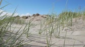 Gras am Strand in Pärnu, Estland. Stock Footage