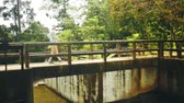 wooden bridge : Girl crosses the river in the jungle