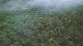 oil industry : Aerial view of palm plantation in the morning with fogs Stock Footage