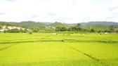 top view art rural landscape. rice field and mountain 動画素材