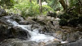small waterfall in mountain forest 動画素材
