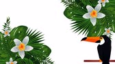 exotic toucan and flowers , hd video animation