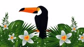 playa hawai : exotic toucan and flowers , hd video animation