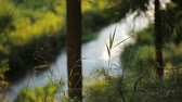 mysterious : blurred image of a flowing river gliding though the summer mysterious forest Stock Footage