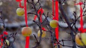 overdue : Apple Tree on Winter Red apples on tree covered with snow in winter, close-up