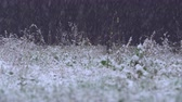 marchs financiers : Strong snow on the grass and trees. The beginning of the winter period in nature Stock Footage