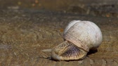 stabilita : Snail close-up, crawling on a wooden surface on a warm spring day