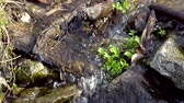 watercourse : A stream, water flowing down a stony surface, feeding plants with moisture