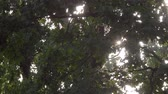 Sun Rays Through Tree Leaves