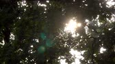 chmýří : Sun Rays Through Tree Leaves