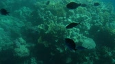 submarino : coral reefs with fish. view from the submarine