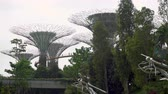 skywalk : Supertree Grove and Skywalk During Afternoon in Singapore