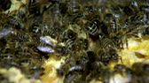 mordendo : bees on collection
