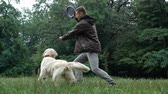 Man and Golden retriever dog playing or training with toy for animal outdoor at nature Stock mozgókép
