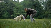 погоня : Man and Golden retriever dog playing or training with toy for animal outdoor at nature Стоковые видеозаписи