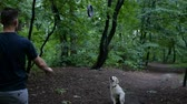 obediência : Man and Golden retriever dog playing or training with toy for animal outdoor at nature Stock Footage
